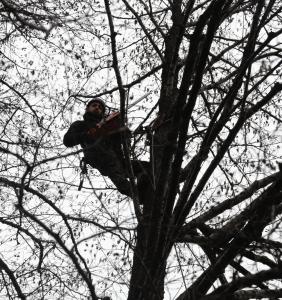 realizacja wycinki drzew