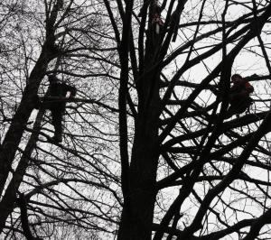ścinanie drzew od góry